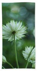 Botanica .. Spray Of Light Hand Towel
