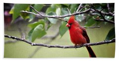 Spring Cardinal Hand Towel by Lana Trussell
