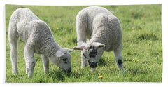 Bath Towel featuring the photograph Spring Lambs by Scott Carruthers