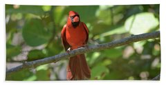 Spring Training Cardinal Bath Towel