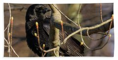 Hand Towel featuring the photograph Springtime Crow Square by Bill Wakeley