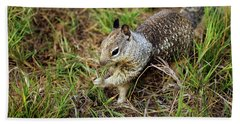 Squirrel At Moonstone Beach, California 002 Hand Towel