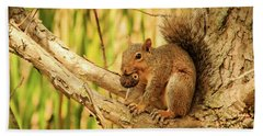 Squirrel In A Tree In The Marsh Bath Towel