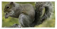 Squirrel, On The Hop Hand Towel
