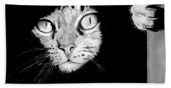 Stalker Cat Bath Towel