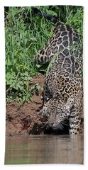 Hand Towel featuring the photograph Stalking Jaguar by Wade Aiken