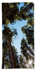 Bath Towel featuring the photograph Star Of The Pine Tree Forest by James BO Insogna