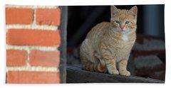 Street Cat Hand Towel by Scott Warner