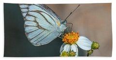 Striped Albatross Butterfly Dthn0209 Hand Towel