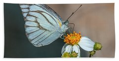 Striped Albatross Butterfly Dthn0209 Hand Towel