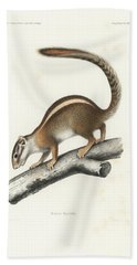 Bath Towel featuring the drawing Striped Bush Squirrel, Paraxerus Flavovittis by J D L Franz Wagner