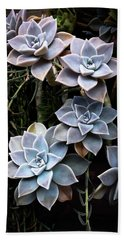 Hand Towel featuring the photograph Succulents Graptopetalum Paraguayense     by Catherine Lau