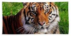 Sumatran Tiger  Bath Towel