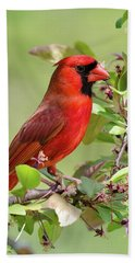Summer Cardinal Hand Towel