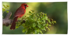 Summer Cardinal New Jersey Bath Towel