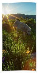 Sundown Flower Dog Hand Towel