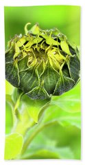 Hand Towel featuring the photograph Sunflower Beauty 666 by Kevin Chippindall