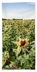 Bath Towel featuring the photograph Sunflower Field by Alexey Stiop