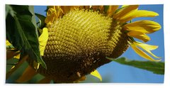 Sunflower, Mammoth With Bees Hand Towel