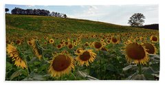 Sunflowers Fields  Bath Towel