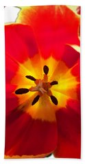 Sunkissed Tulips Hand Towel