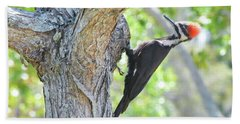 Surprised By Pileated Hand Towel