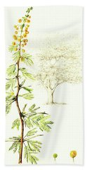 Bath Towel featuring the painting Sweet Thorn Botanical Illustration by Heidi Kriel