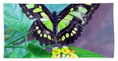 Tailed Jay Visits Lantana Bath Towel