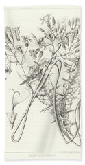 Bath Towel featuring the drawing Taper Tip Hawksbeard, Crepis Acuminate by Antoine Sonrel