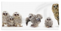 Tawny Owl Family Bath Towel