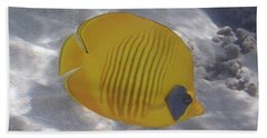 The Bluecheeked Butterflyfish Red Sea Hand Towel