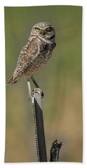 The Burrowing Owl Hand Towel by Steve McKinzie
