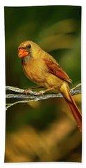 The Female Cardinal Bath Towel