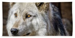 Hand Towel featuring the photograph The Gray Wolf by Teri Virbickis