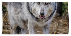 Hand Towel featuring the photograph The Great Gray Wolf by Teri Virbickis