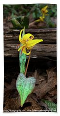 The Lone Trout Lily Bath Towel by Barbara Bowen