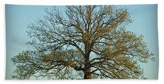 The Mighty Oak In Spring Hand Towel