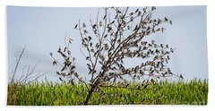 Hand Towel featuring the photograph The More The Merrier- Tree Swallows  by Ricky L Jones