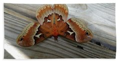 The Moth Hand Towel by Nick Kirby