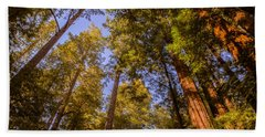 The Portola Redwood Forest Hand Towel