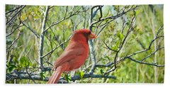 The Red Cardinal Bath Towel by Judy Kay