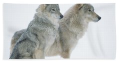 Timber Wolf Portrait Of Pair Sitting Hand Towel