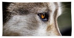 Bath Towel featuring the photograph Timber Wolf Stare by Teri Virbickis