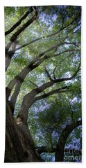 Hand Towel featuring the photograph Tree Rays by Brian Jones