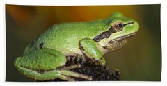 Treefrog On Rudbeckia Bath Towel