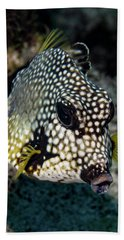 Hand Towel featuring the photograph Trunkfish Portrait by Jean Noren