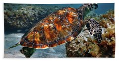 Turtle And Shark Swimming At Ocean Reef Park On Singer Island Florida Hand Towel by Justin Kelefas