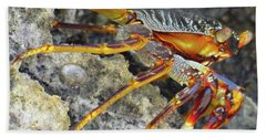 Turtle Bay Resort Watamu Kenya Rock Crab Hand Towel by Exploramum Exploramum