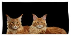 Two Ginger Maine Coon Cat On Black Bath Towel