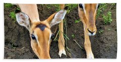 Two Impala Hand Towel